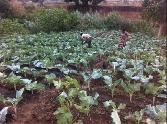 Ninoxukuru Muluku Apwiya
