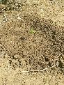 Plantación árboles en cantera piedra natual